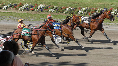 How To Bet: Harness Races | Hollywood Casino Raceway Bangor