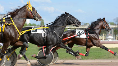 Horse betting online harness canada sports betting